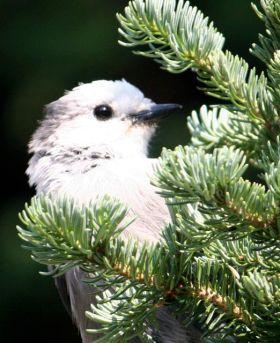 Bird watchers paradise