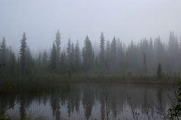 Foggy valley morning
